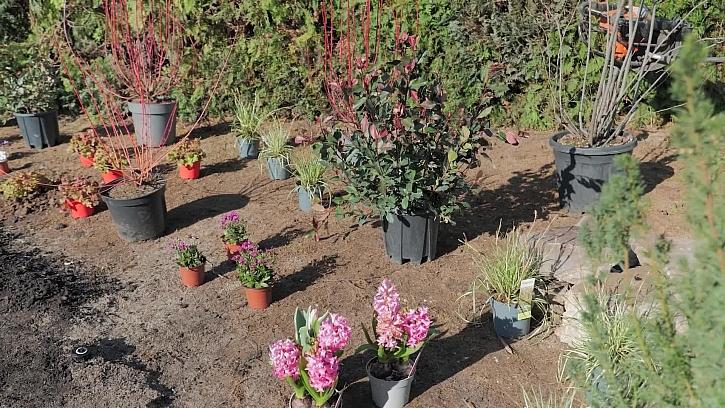 Přijela zahradnická firma Zelené kolo a zrekonstruovala celou zahradu podle projektu realizace zahrady