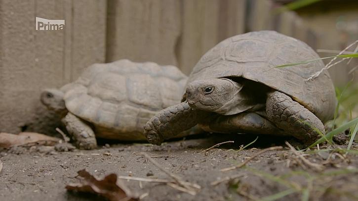 Je nejvyšší čas na zazimování želv