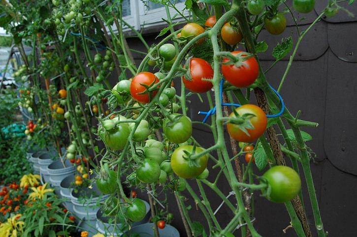 Sklízíme a ukládáme zeleninu