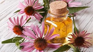 Pěstujte echinaceu! Tahle rostlina může rozhodnout o vašem zdraví nebo nemoci