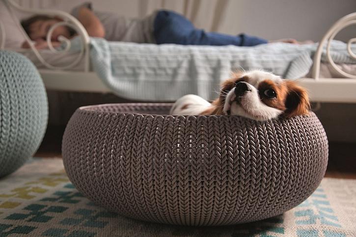 Vybavení pro psa, které vám i vašemu psímu parťákovi zpříjemní život (Zdroj: Hornbach)