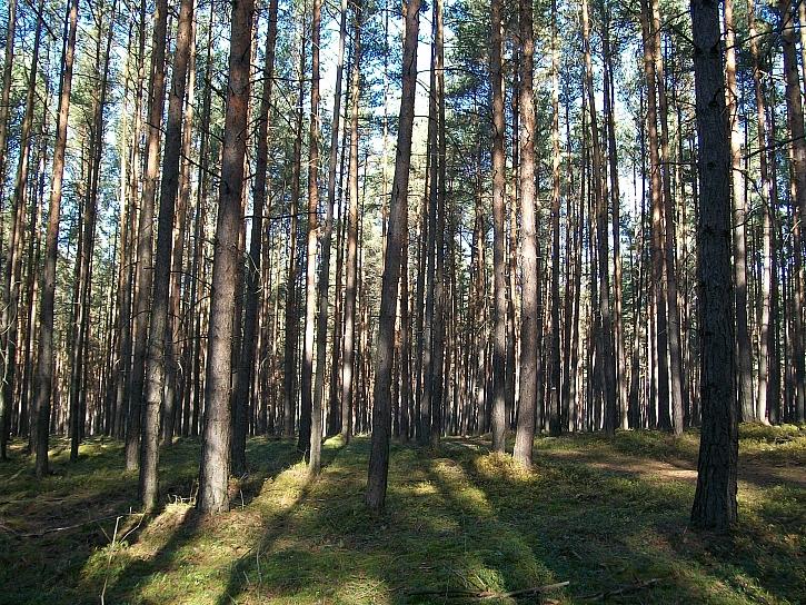 Pozvánka na akci Den obnovy lesa