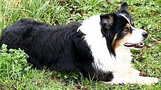 Psi si zaslouží tu nejlepší péči: Rady ohledně výchovy aprevence některých onemocnění