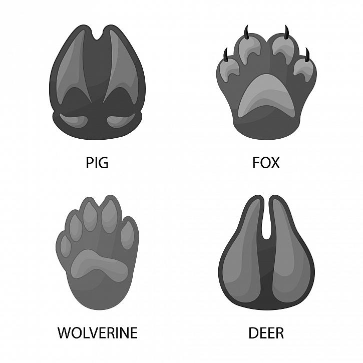 Zvířecí stopy