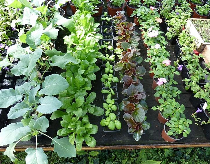 Více z přírody - nová unikátní hnojiva