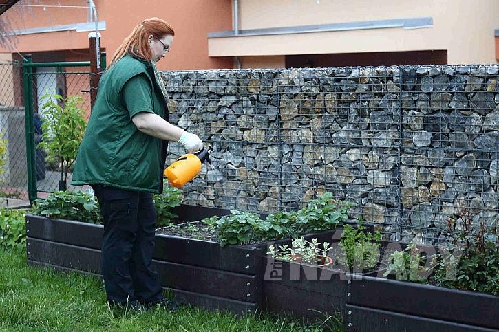 Postřik rostlin na zahradě