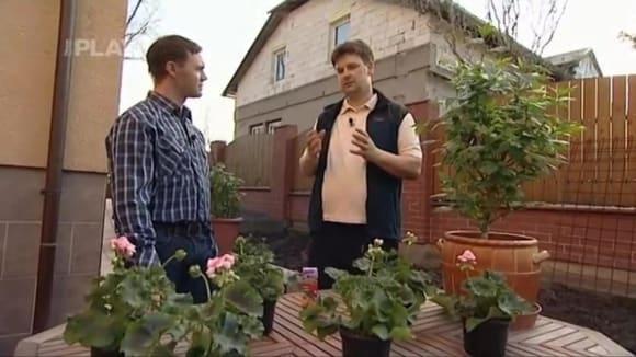Stimulace okrasných rostlin
