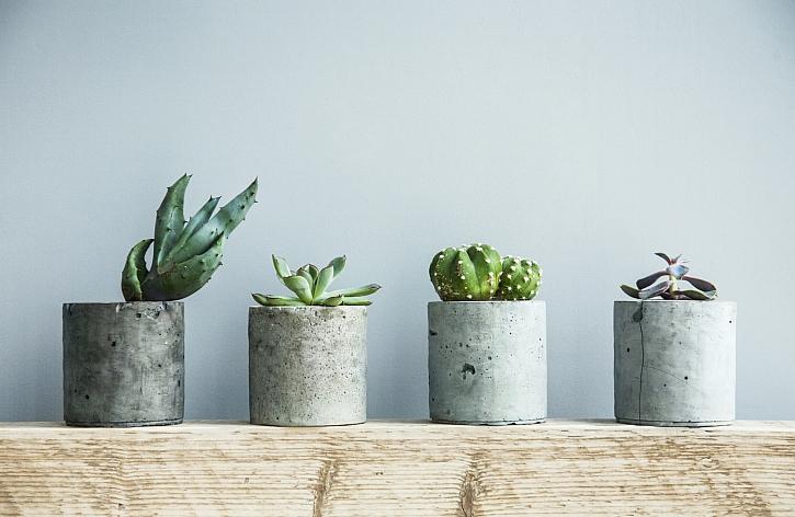 Sukulentní rostliny