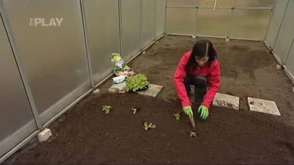 Příprava skleníku před sezonou