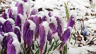 Zahrada v únoru: 3 rady pro jara nedočkavé zahrádkáře