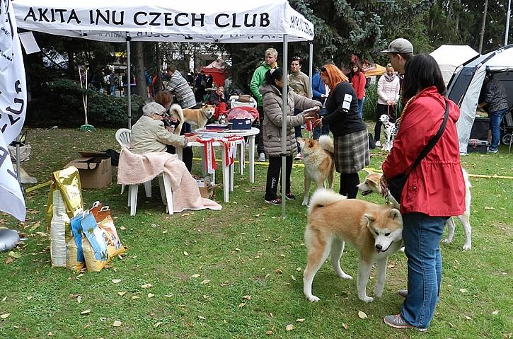 Člověk v přírodě - krajská výstava psů