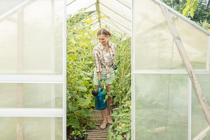 Skleník, zdroj vynikající zeleniny, na podzim vydezinfikujte a zryjte