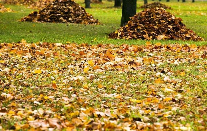 Nastává čas úklidu listí, vezměte na to pořádného pomocníka