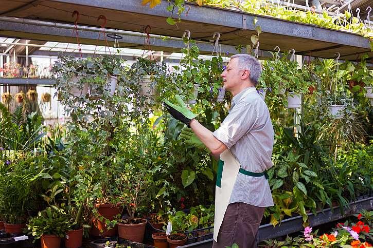 Parazitická vosička se stane vaším užitečným pomocníkem ve skleníku (Zdroj: Depositphotos (https://cz.depositphotos.com))