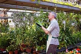 Parazitické vosičky vám můžou zachránit celou úrodu ve skleníku