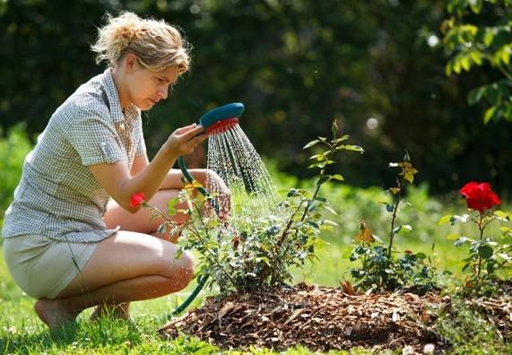 Rostliny s mnoha talenty