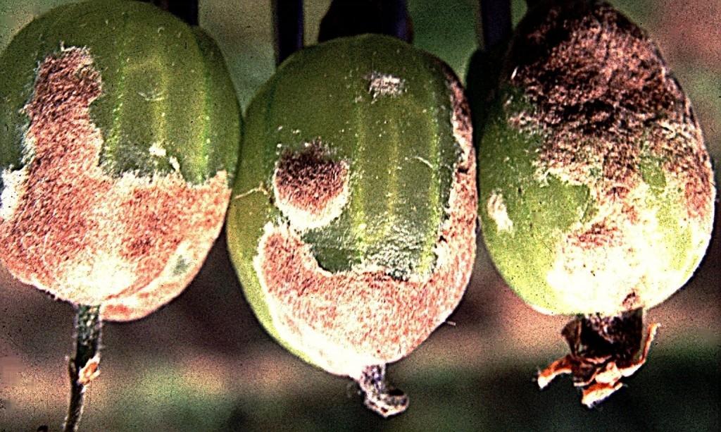 S ochranou rostlin je třeba začít již v předjaří