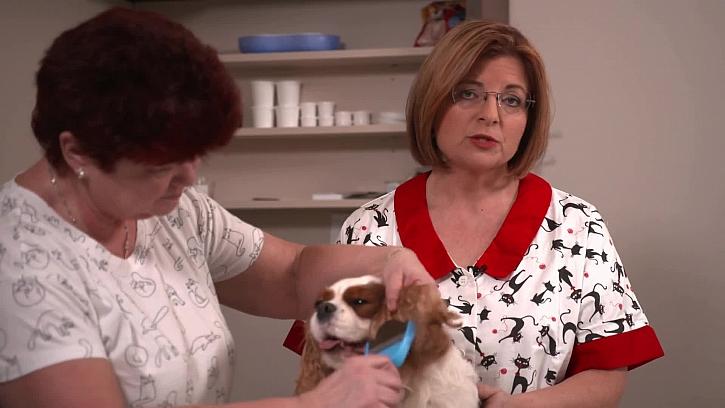 Jak domácím mazlíčkům ostříhat drápky a pečovat o srst i uši
