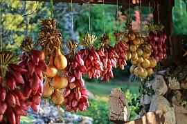 Cibule kuchyňská: Jak a kdy ji sklízet, abychom nic neuspěchali