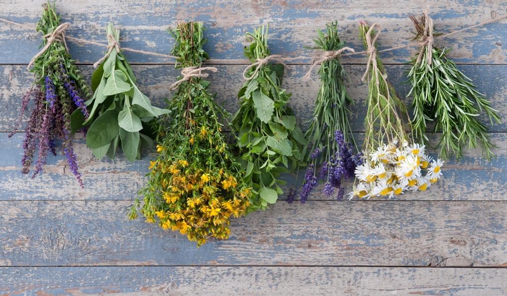 Sběr a sušení léčivých bylinek aneb Šikovné vychytávky babky kořenářky
