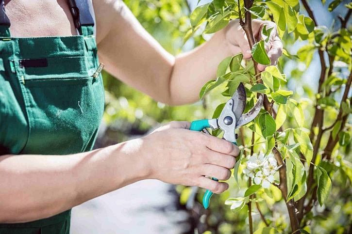 Stromy i keře v zahradě je třeba na jaře prostříhat, aby se podpořil růst a plození