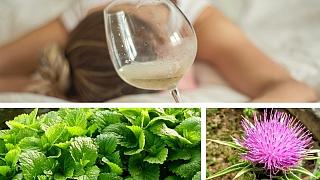 Jak přežít kocovinu: 9 bylin, které urychlují odbourávání alkoholu