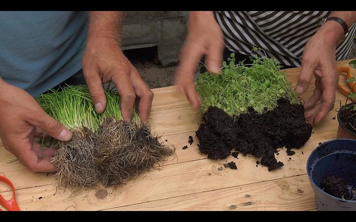 Lída s Honzou ukazují rozbalené bylinky zakoupené v supermarketu.