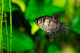 Akvarijní rybky pro začátečníky