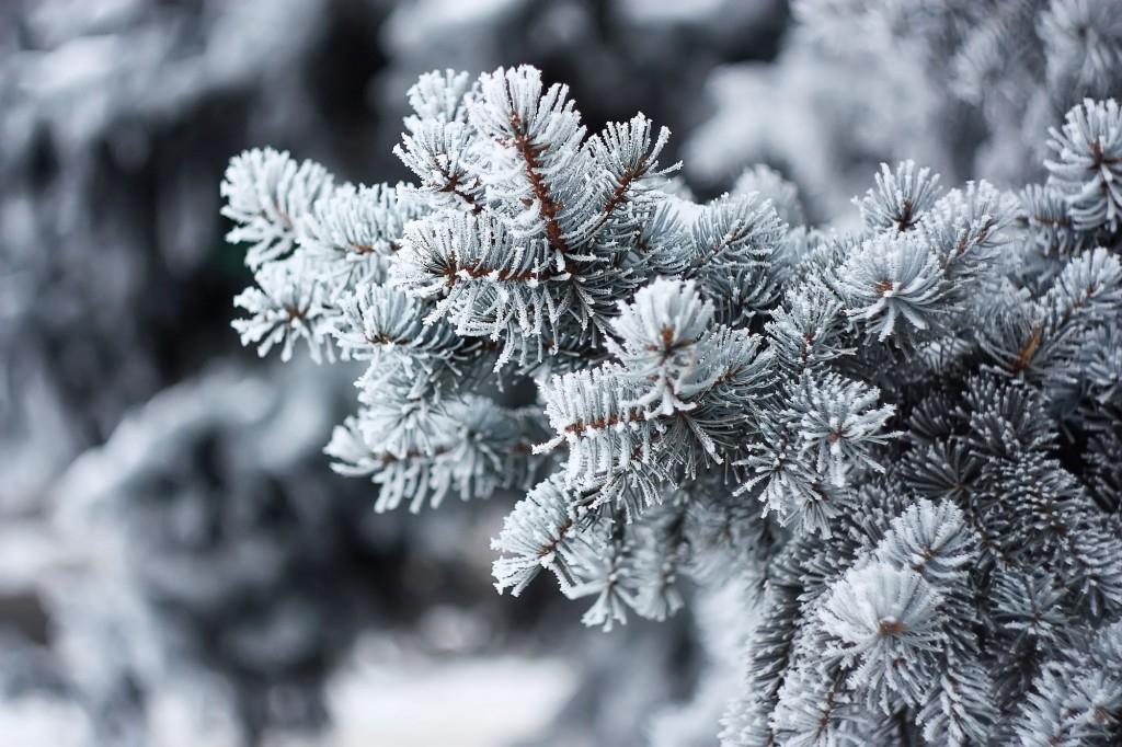 Zimní ochrana vám zachrání rostliny před mrazem
