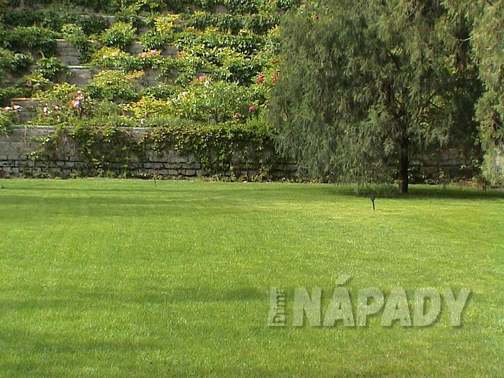 Pro dosažení krásného trávníku je důležité vybrat správnou travní směs (Zdroj: Ludmila Dušková)