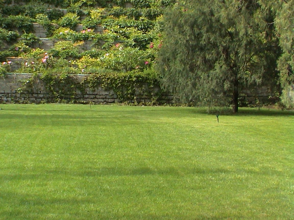 Pokud se rozhodneme založit trávník, je potřeba vybrat vhodnou travní směs