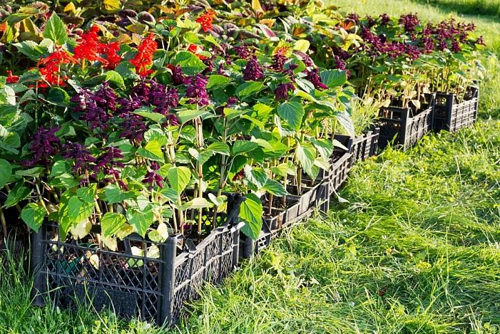 Rostliny není problém sehnat, větší potíž může být zajistit kvalitní zeminu