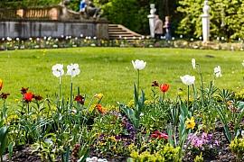 Na zahrady se vrací jaro, je potřeba jim věnovat trochu péče