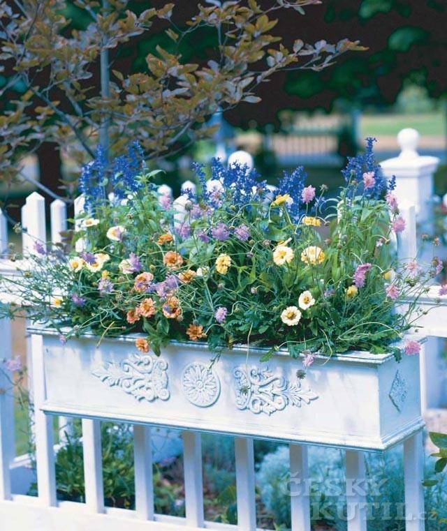 Květiny pěstované v nádobách