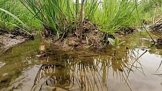 Jak v naší zahradě zadržet vodu v tůních a jezírkách
