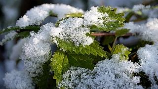 Když na Dušičky jasné počasí panuje, příchod zimy to oznamuje aneb listopad v lidové meteorologii