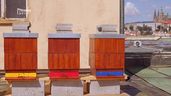 Zkuste chovat včely na střeše (Zdroj: Včely na střeše)