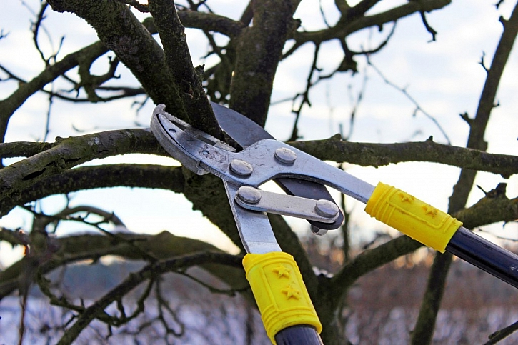 Detail převodových nůžek na větve ukazuje, jakou silou stříhají
