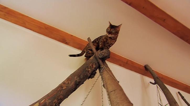 Kočka na prolézačce