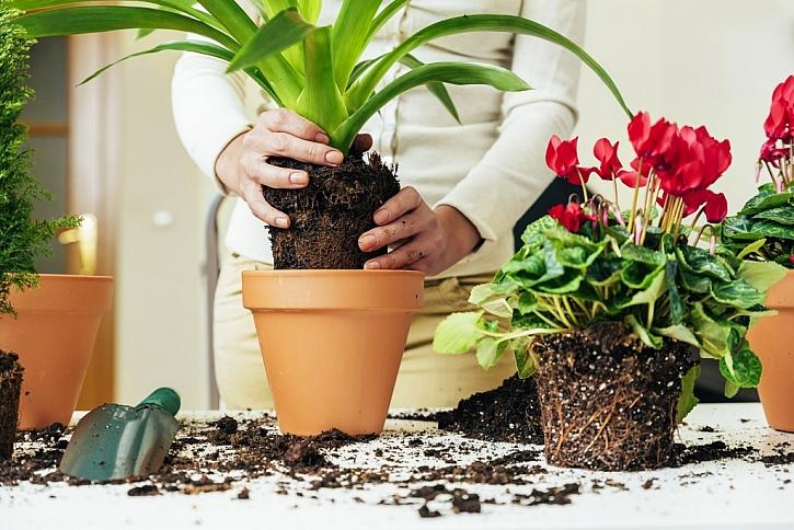 Používejte kvalitní zeminu pro pěstování