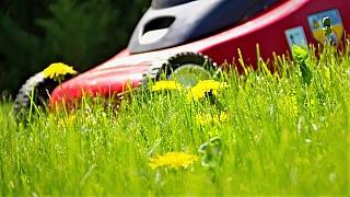 5 rad, jak správně probudit trávník po zimě apřipravit zahradu na jaro