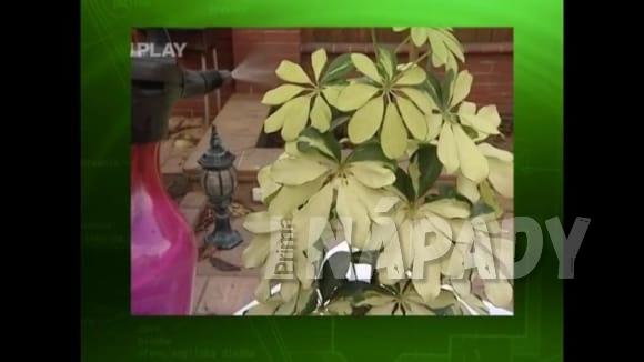 Likvidace škůdců pokojových rostlin