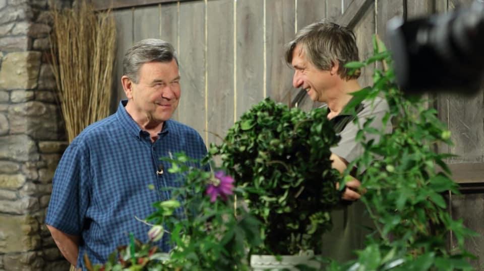 Jak pěstovat oblíbené květiny našich babiček: Mučenka, blahokeř avoskovka