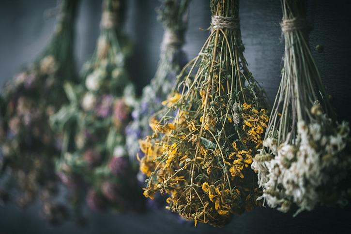 Jak správně nasušit jarní bylinky? (Zdroj: Les Houbeles)