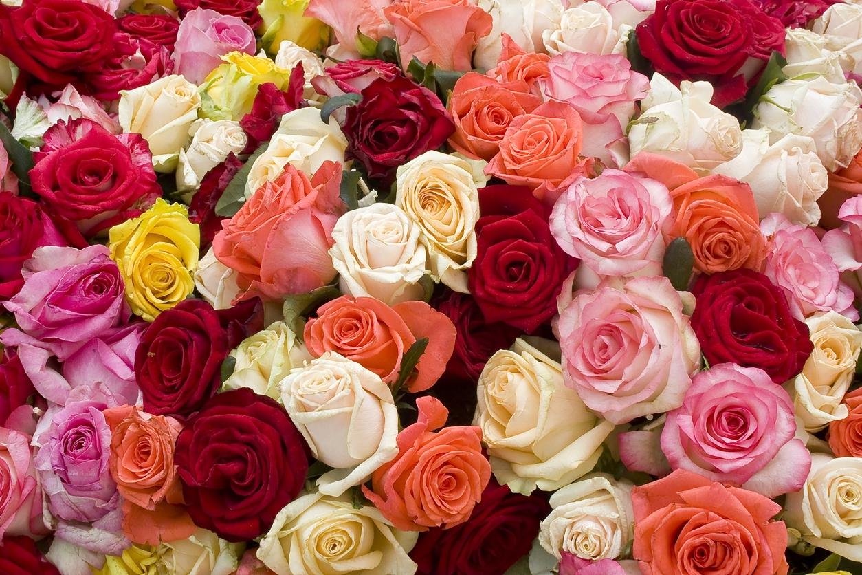Kam na výlet: Vydejte se za nejkrásnějšími růžemi letošního roku