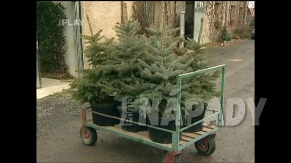 Kontejnerované vánoční stromky k dalšímu pěstování