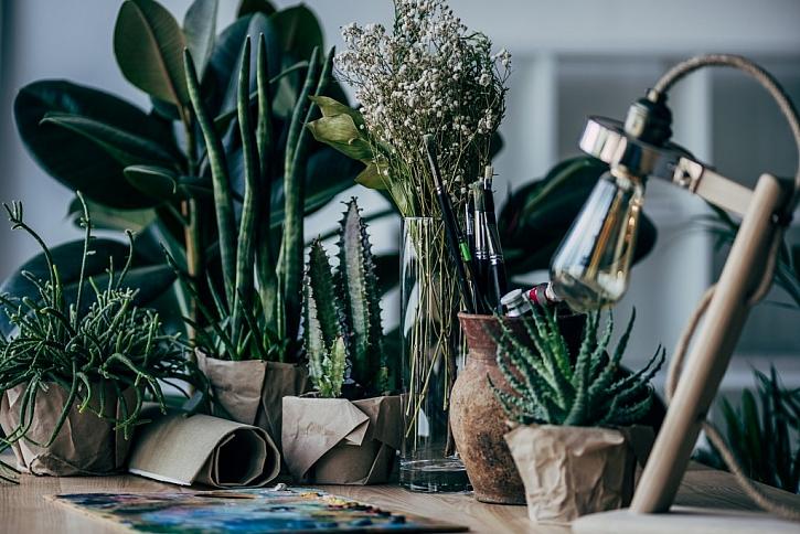 Jedovaté rostliny, které můžete pěstovat doma