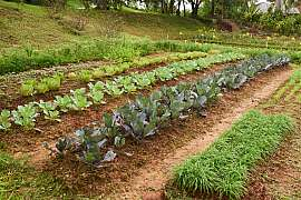 Objevili jste na zelenině škůdce či choroby? Začněte s jejich prevencí!