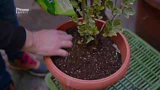 Výživa nádobových rostlin
