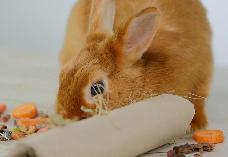Jak nakrmit a zabavit králíka: seno v papírové ruličce